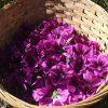 Panier de fleurs de mauve