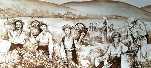 La récolte de la rose de Damas en Bulgarie