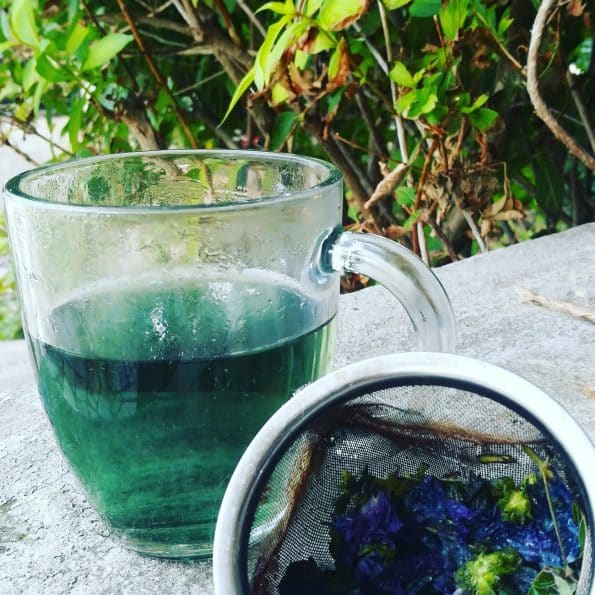 infusion bleue