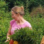 menthe poivrée bouquet